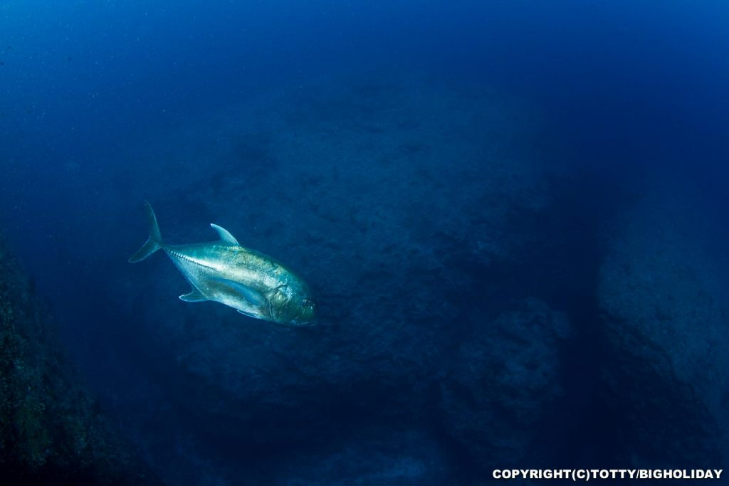 宮古島ダイビングポイント:ハナダイアーチ
