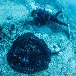 今季初の八重干瀬遠征|サンゴ以外の主役たち