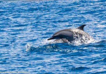 【確率UP!】最近イルカの遭遇率がグングン上がっている件について