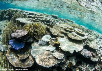 ロード・オブ・ザ・OPEN!× 2016大事件「サンゴ白化現象」