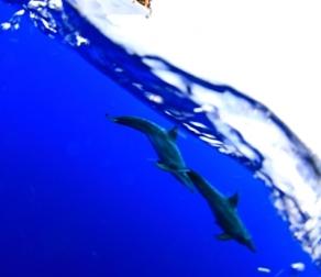 宮古島では野生イルカに逢えるの?