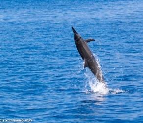 【2017年最新版】宮古島で野生のイルカに逢いに行こう!