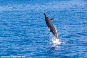 【2021年最新版】宮古島で野生のイルカに逢いに行こう!