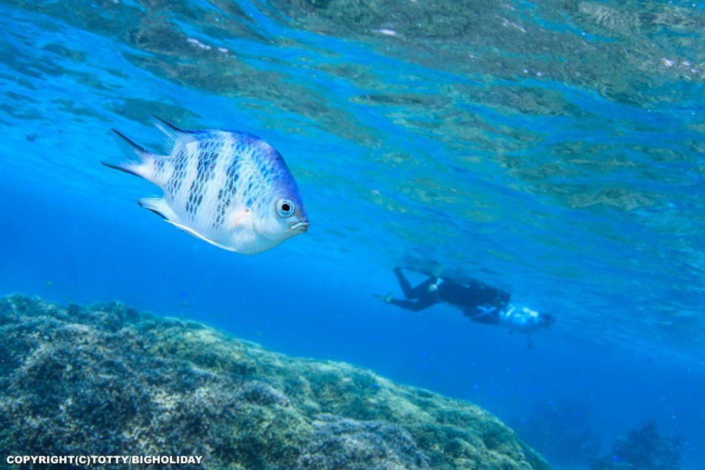 ビーチポイントの魚たち