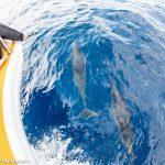 【ここだけの話!】宮古島のイルカに最接近する方法