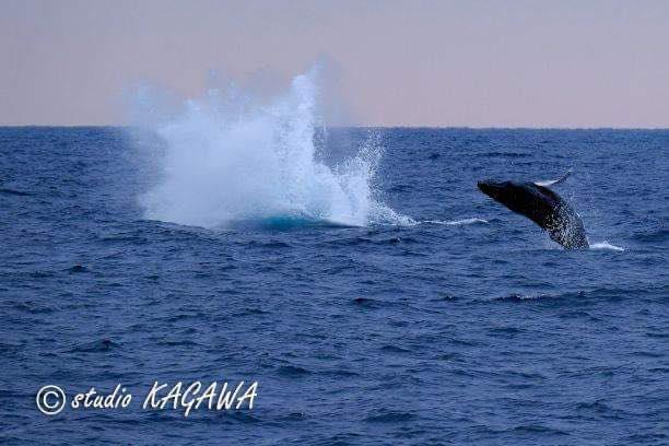 クジラのアクション:ブリーチ