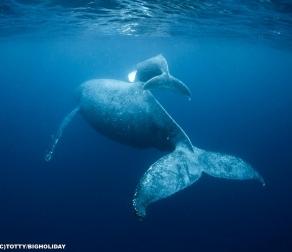 【クジラと泳げる!?】徳之島のホエールスイムに参加してきました