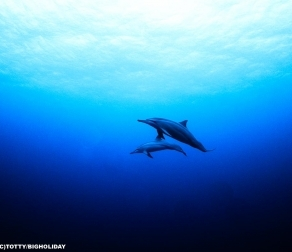 水中で『イルカ』と遭遇!宮古島に住み着いているイルカファミリーと偶然の出会い