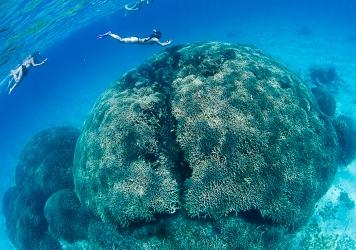 宮古島のサンゴの凄さ ユビエダハマサンゴ