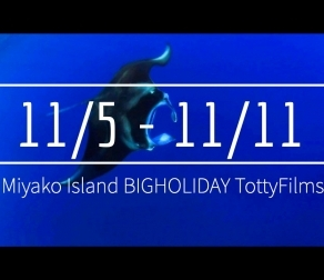 【11/5〜11/11】THIS WEEK'S BIGHOLIDAY