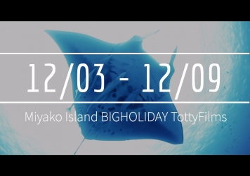 【12/3〜12/9】THIS WEEK'S BIGHOLIDAY