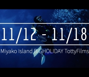 【11/12〜11/18】THIS WEEK'S BIGHOLIDAY
