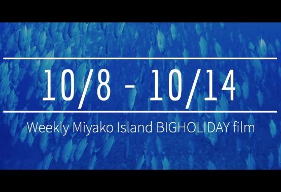 【10/8〜10/14】This week's BIGHOLIDAY