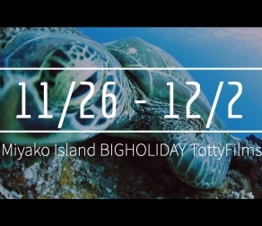 【11/26〜12/2】THIS WEEK'S BIGHOLIDAY